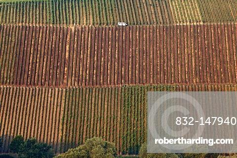 Vineyards near Koehler, Volkach loop of the Main river, Main-Franconia region, Lower Franconia, Franconia, Bavaria, Germany, Europe