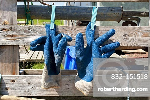 Working gloves left to dry