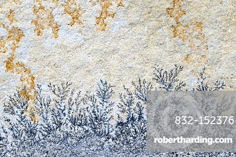 Solnhofen limestone with dendrites, Solnhofen, Bavaria, Germany, Europe