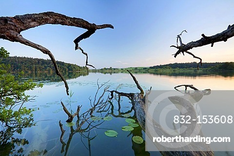 Old tree branches on Lake Mindelsee, Baden-Wuerttemberg, Germany, Europe
