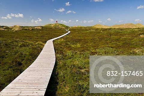 Boardwalk through the dunes and lighthouse, Amrum island, Schleswig-Holstein, Germany, Europe