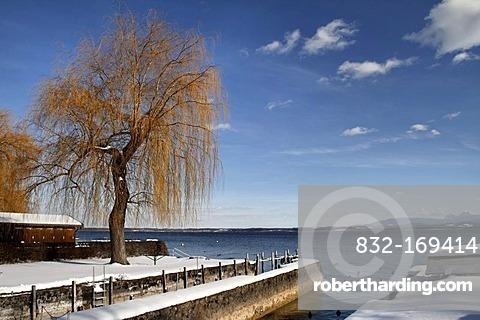 Shoreline of the Fraueninsel island in winter, Lake Chiemsee, Chiemgau, Upper Bavaria, Germany, Europe
