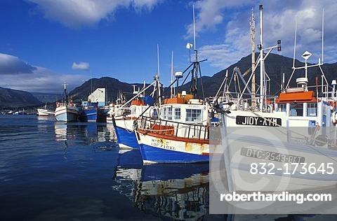Fishing boats in the harbor of Hout Bay, Cape Town, Western Cape, South Africa, Africa