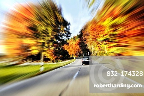 Road through a forest in autumn, Bavaria, Germany, Europe