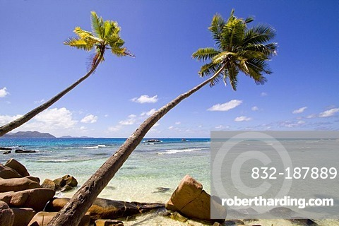 Coconut Palms (Cocos nucifera) and granite rocks by the sea, Anse Severe, La Digue Island, Seychelles, Africa, Indian Ocean