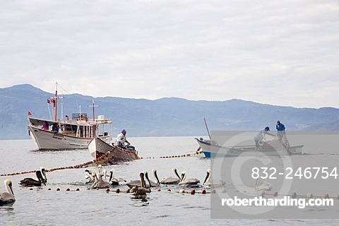 Fishing boats catching sardines, Santa Fe, Caribbean, Venezula, South America