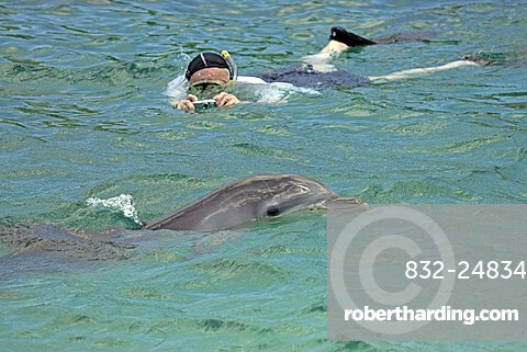 Common Bottlenose Dolphin (Tursiops truncatus), adult, swimming with snorkeler, Roatan Island, Honduras, Caribbean, Central America