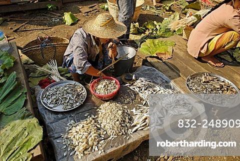 Traditional fish market, Bhamo, Kachin State, Burma, Myanmar, Asia