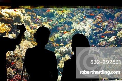 Aquarium, Loro Parque, Puerto de la Cruz, Tenerife, Canary Islands, Spain