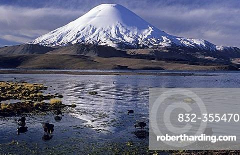 Volcanoe Parinacota (6342 m) and Lago Chungara, Lauca National Park, Chile
