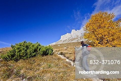Ascent of Piz Boe Mountain on the Piazzetta Climbing Route, Dolomites, Alto Adige, Italy, Europe