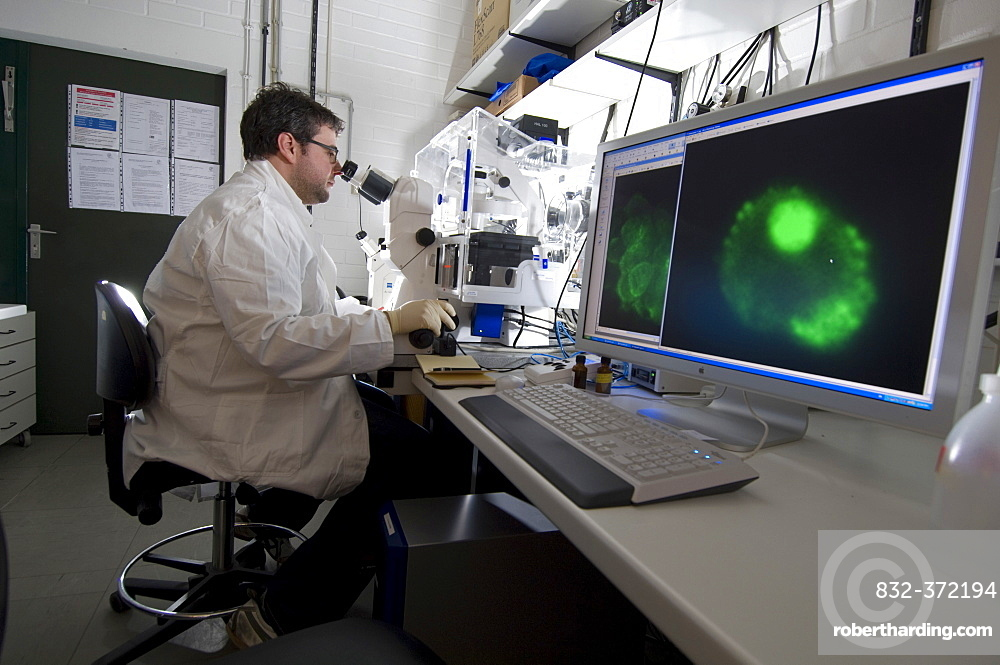 Stem cell research, Max Planck Institute for Molecular Genetics, laboratory technician observing nerve cells through a microscope, Berlin, Germany