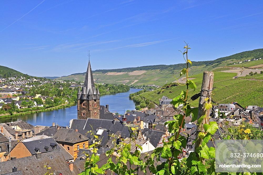 Vineyards in Bernkastel, parish church St. Michael, Bernkastel-Kues, Rhineland-Palatinate, Germany, Europe