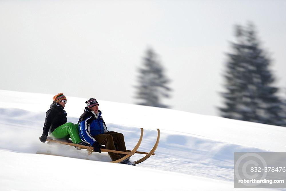 Horn sledge at full speed, Gunzesried, Oberallgäu, Bavaria, Germany, Europe