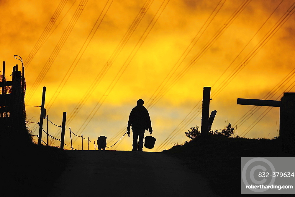 Man and dog walking along path, evening light, silhouette, Singscheider Hohe, Essen-Kupferdreh, North Rhine-Westphalia, Germany, Europe