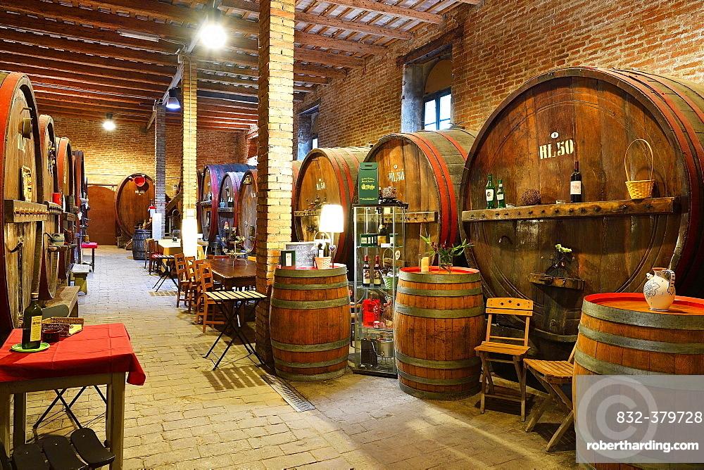 Barrels in cellar, Antica Cantina San't Amico winery,  Morro D'Alba, Marche, Italy, Europe