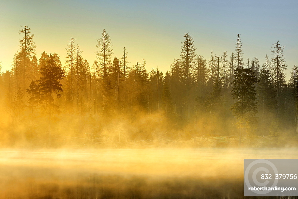 Sunrise at the Oder pond with morning mist, natural forest, spruces partly dead due to bark beetle infestation, Harz National Park, Lower Saxony, Germany, Europe