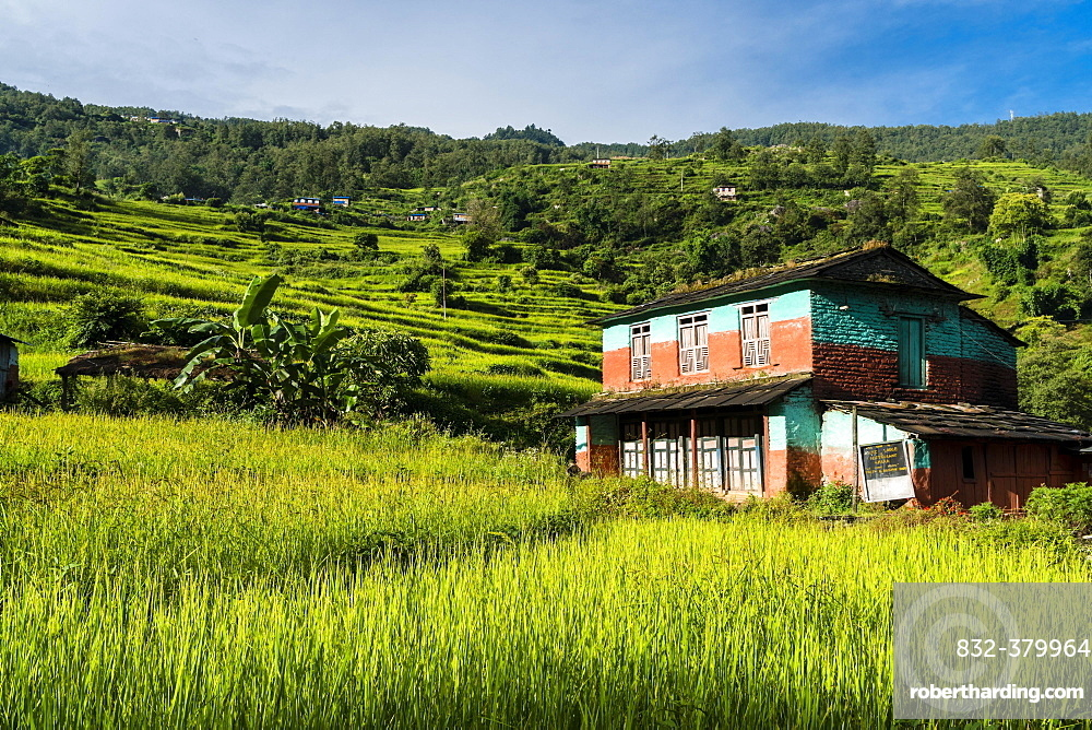 Farmhouse in agricultural landscape with green terrace rice fields, Chitre, Upper Kali Gandaki valley, Myagdi District, Nepal, Asia