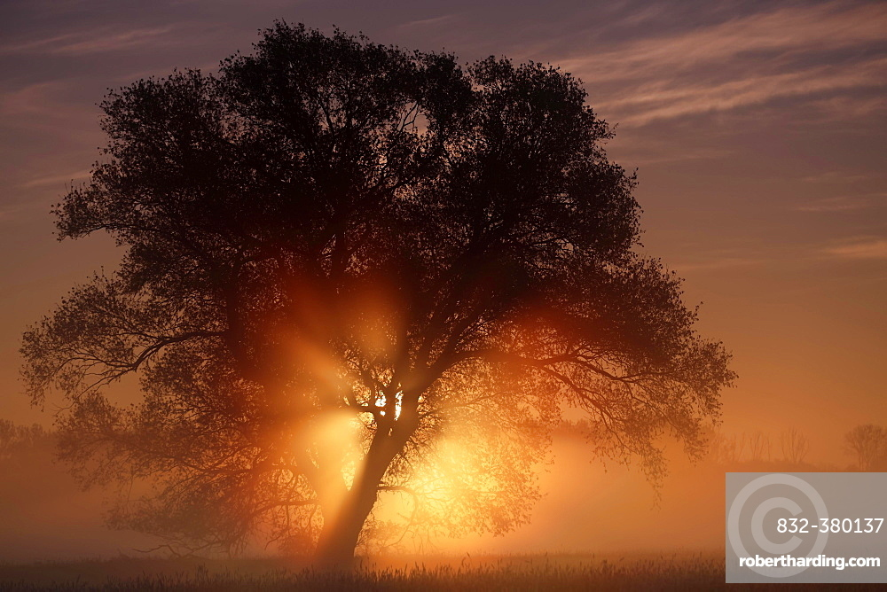 Sunrise in the floodplain, Middle Elbe Biosphere Reserve, Saxony-Anhalt, Germany, Europe