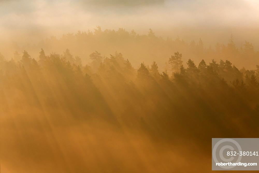 Rays of sunlight in morning fog, Saxon Switzerland National Park, Saxony, Germany, Europe