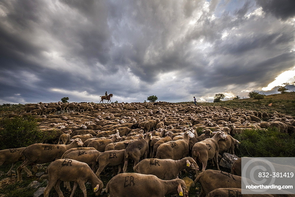 Paths of transhumance with the last people who dedicate themselves to this work in Spain through the region of Soria