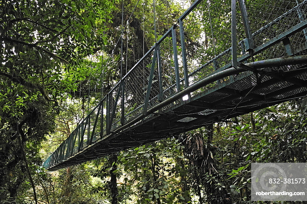 Suspension bridge in a cloud forest, Selvatura Park, Monteverde, province of Alajuela, Costa Rica, Central America