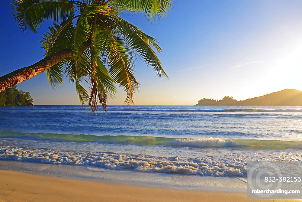 Coconut tree overhanging, in the beautiful bay of Baie Lazare, evening light, Mahe Island, West Coast, Seychelles, Africa