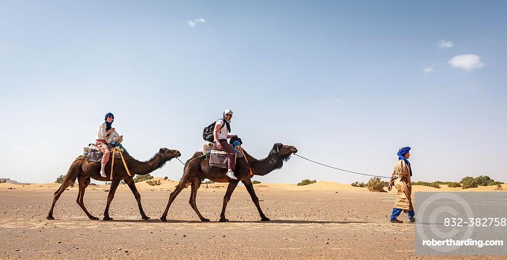 Caravan with dromedaries (Camelus dromedarius), sand dunes in the desert, Erg Chebbi, Merzouga, Sahara, Morocco, Africa