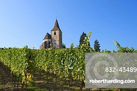 Church in the vineyards of Hunawihr, Alsace, France, Europe