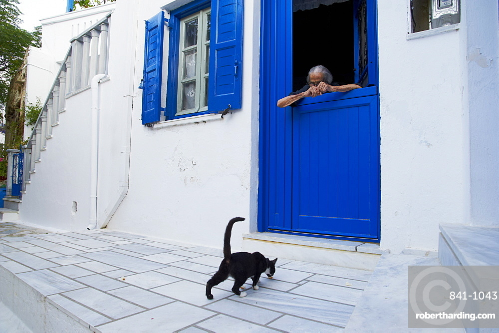 Cat, Pyrgos village, Tinos, Cyclades, Greek Islands, Greece, Europe