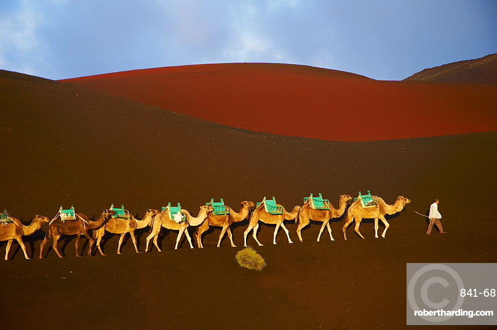 Excursion by camel to visit volcano, National Park of Timanfaya, Lanzarote, Canary Islands, Spain, Europe