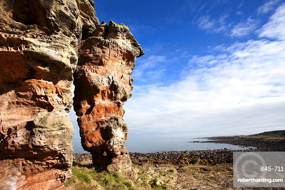 Buddo Rock on the Fife Coastal Path near Boarhills, Fife, Scotland, United Kingdom, Europe