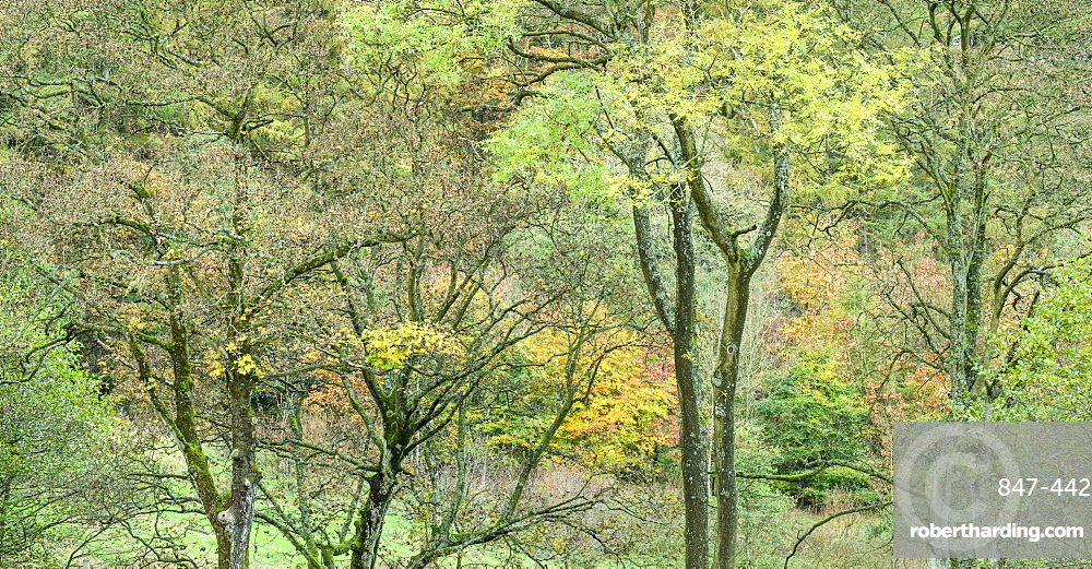 Autumn colour in the Washburn Valley, North Yorkshire, Yorkshire, England, United Kingdom, Europe