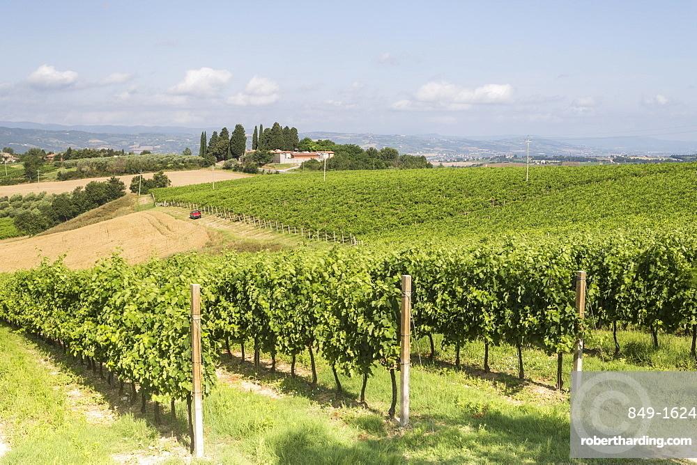 Vineyards near to Todi, Umbria, Italy, Europe