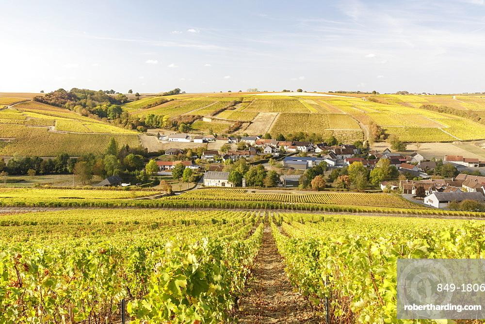 The vineyards of Sancerre, known for fine wines from grape varieties such as pinot noir and sauvignon blanc, Sancerre, Cher, Centre-Val de Loire, France, Europe