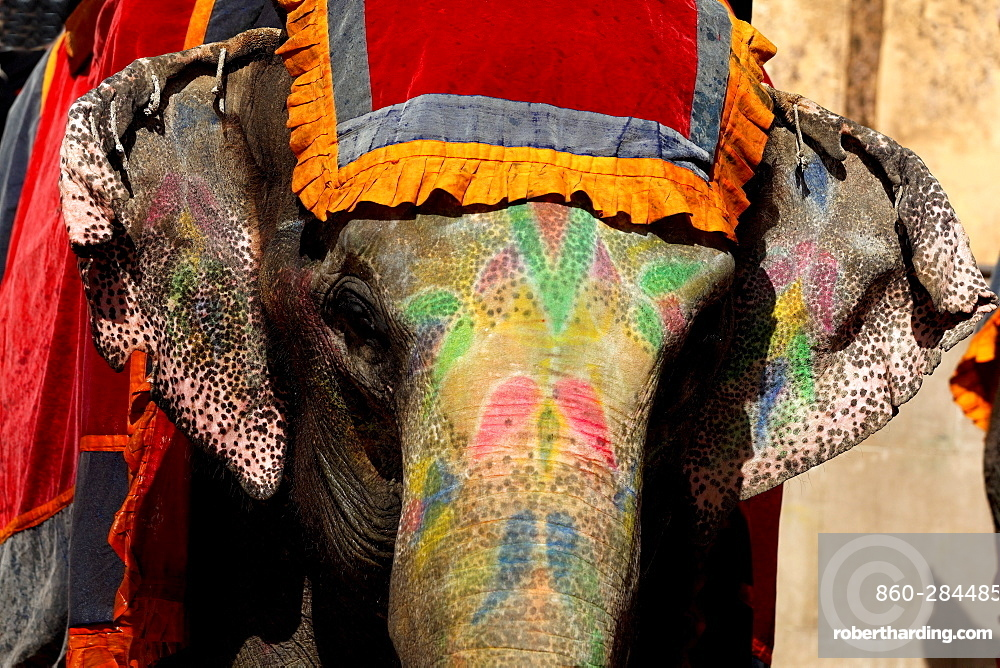 Asian Elephant painted for a ceremony, Rajasthan India