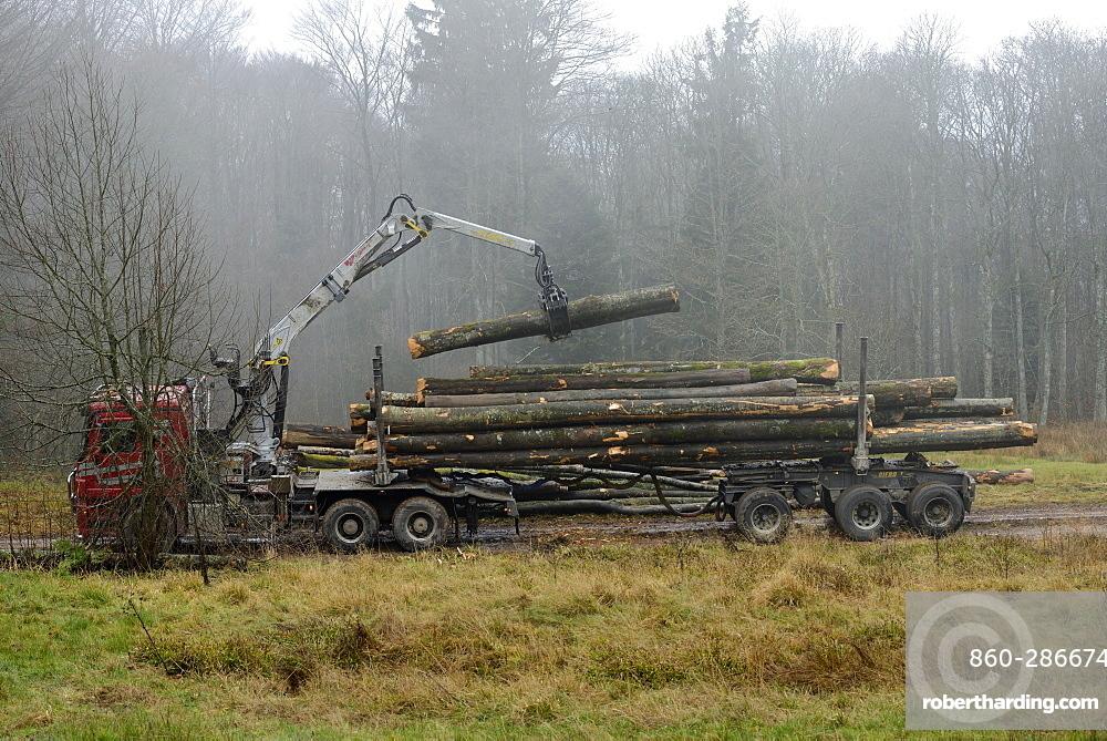 logging truck loading of beech logs , above Hohwald, between the Col de la Charbonnière and Champ du Feu, High Vosges, Alsace, France