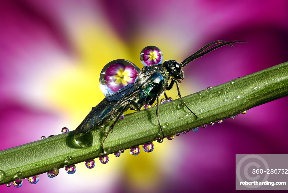 Insect covered by dew drops on a stem