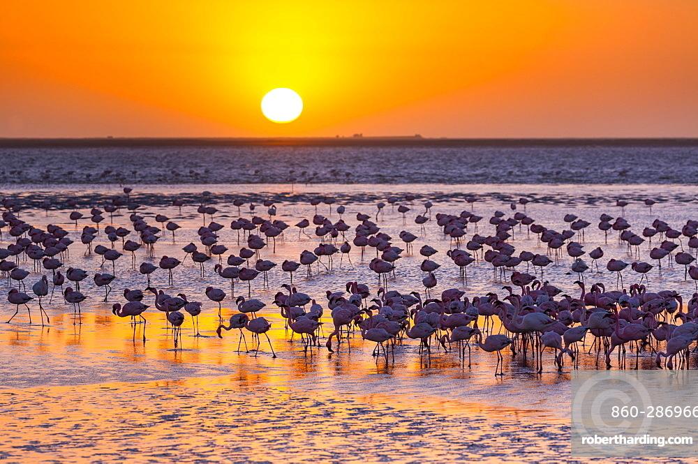 Flamingos, Salinas, Walvis Bay, Namibia, Africa