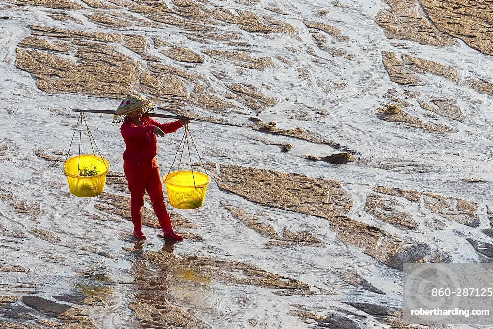 Fisherman on foot, harvesting shells, wearing a yoke with two buckets, Woman, Xiapu County, Fujiang Province, China
