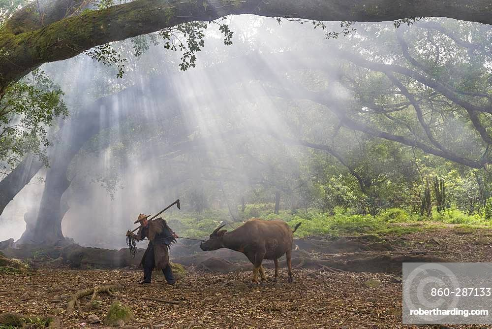 Farmer in traditional clothes and domestic buffalo for agricultural work, Xiapu County, Fujiang Province, China