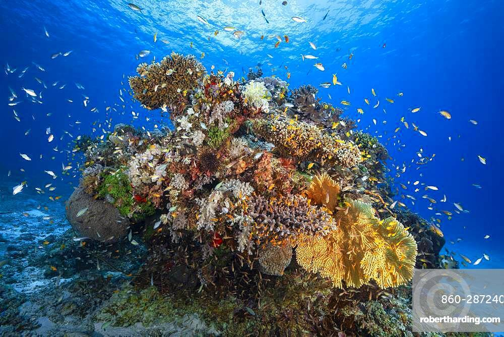 Coral reef in the lagoon, Mayotte