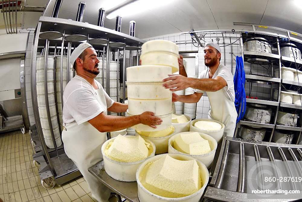 Morbier cheese making, Cheese factory, Damprichard, Doubs, France