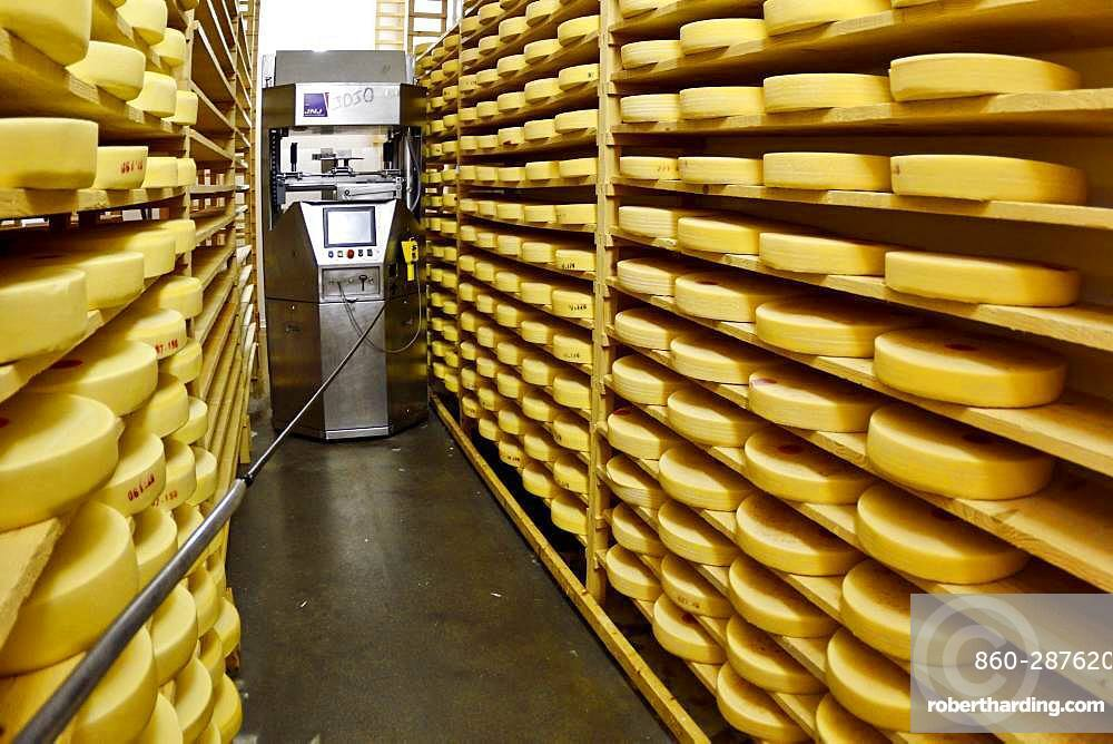 Comte cheese making, robot brushing cheese grinders in a maturing cellar, Cheese factory, Damprichard, Doubs, France