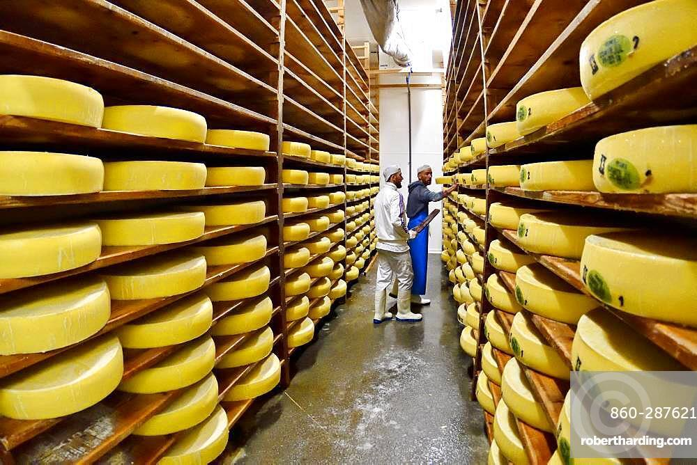Comte cheese making, cheese grinders in a maturing cellar, Cheese factory, Damprichard, Doubs, France