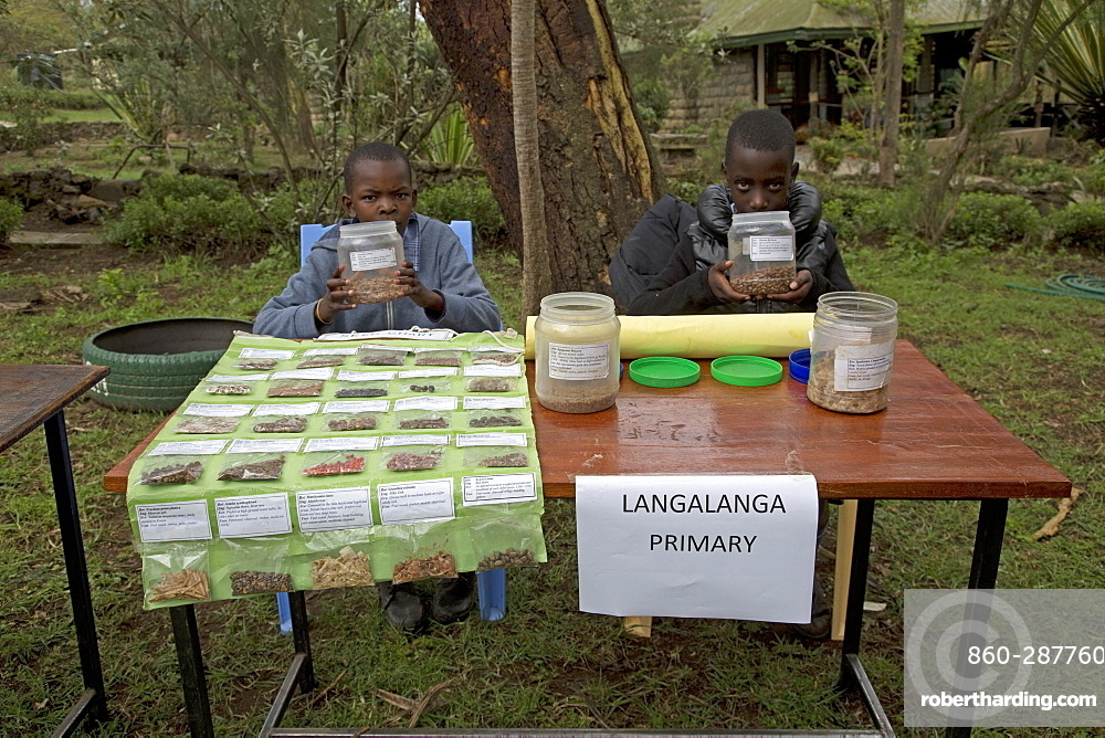 Seed collection native African trees for planting Langa Langa School, Kenya