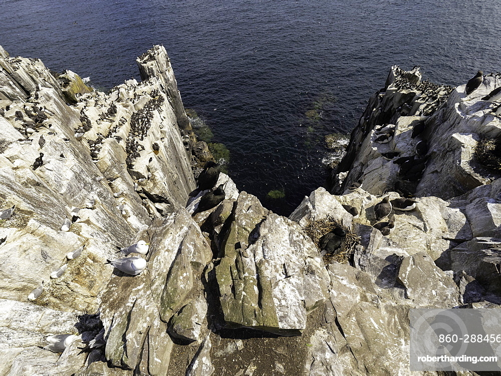 A clifftop view of a bird colony off the coast of Northumberland, UK.