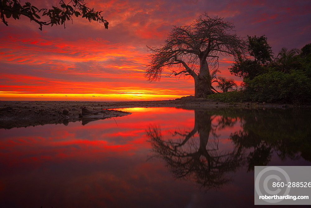 Baobab and small basin filled with water during high tide and sunset. South Mayotte