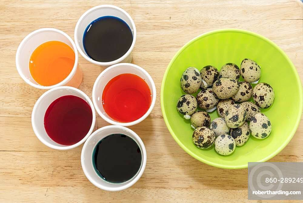 Coloring quail eggs with natural dyes for Easter, spring