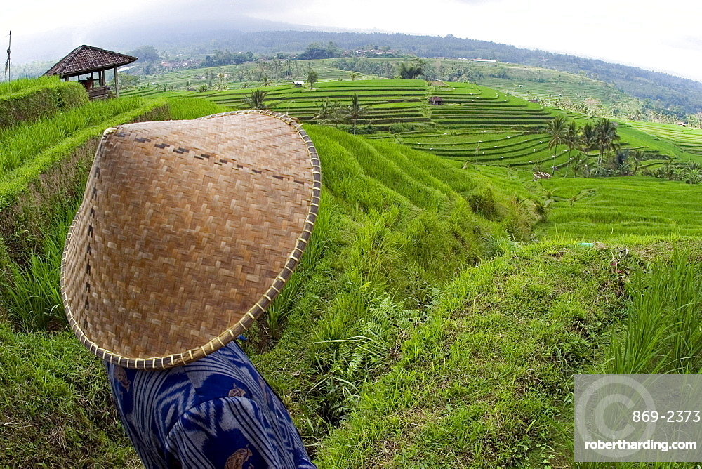 an Indonesian worker looks out over terraced rice fields in the interior of Bali Indonesia Asia